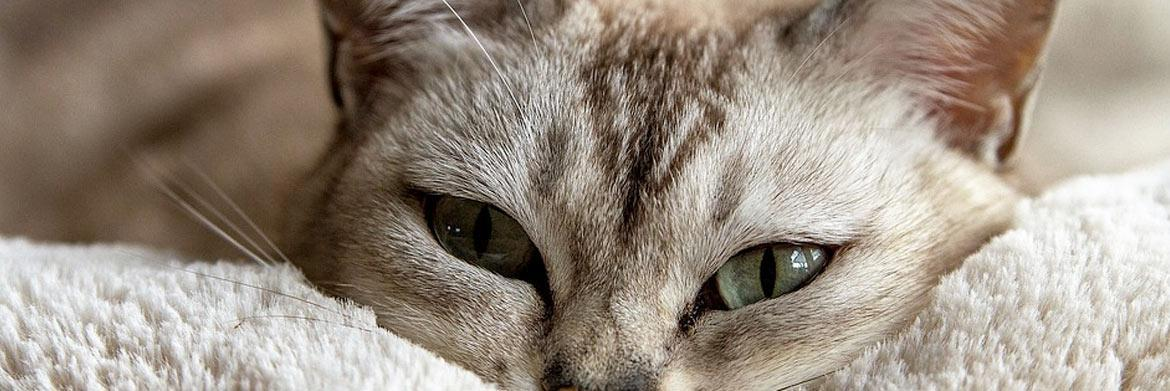 Make Your Cat Feel like a Million Bucks with These Grooming Tips