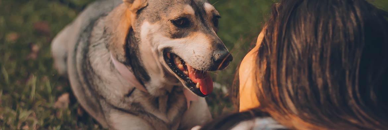 3 Ways to Keep Your Pets Flea Proof