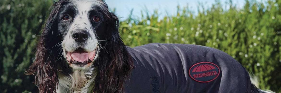 Reasons to Get a Dog Coat for Your Canine