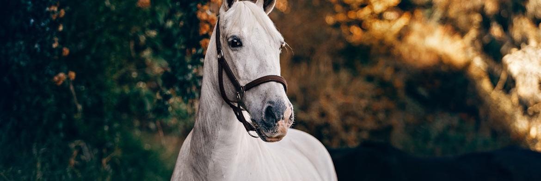 6 Common Horse Feeding Mistakes