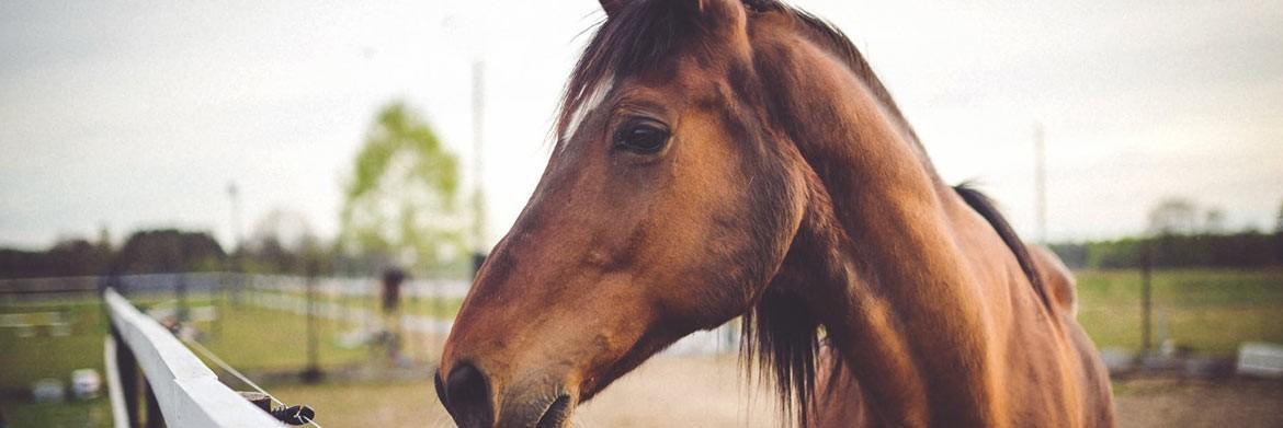 How to Help a Horse Gain Weight