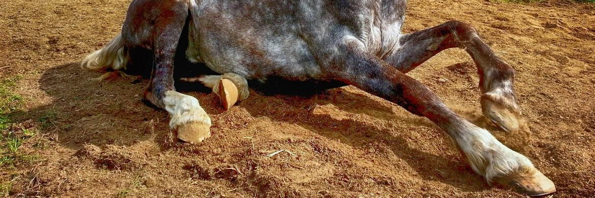A Basic Guide To Horse Hoof Care