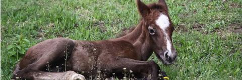 A Guide to Feeding an Orphan Foal