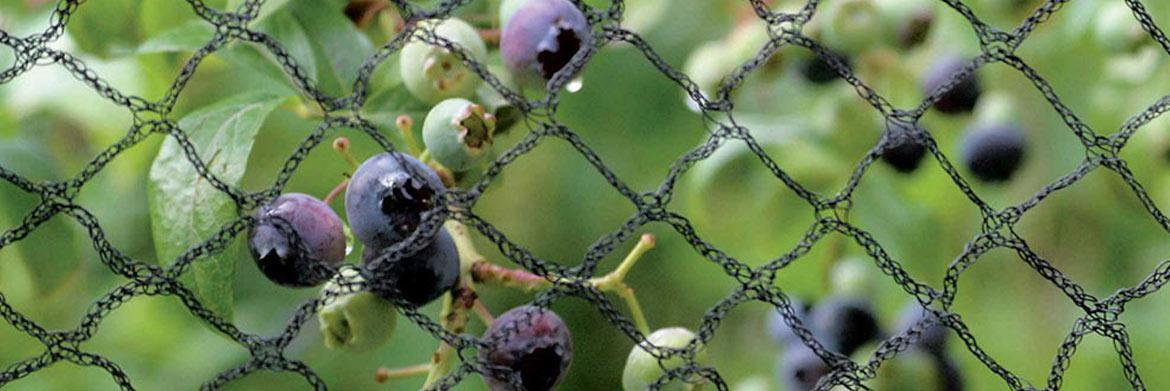 How to Choose the Right Garden Netting for Your Plants