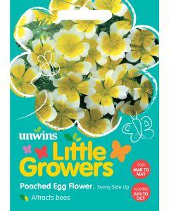 Little Growers Poached Egg Flower Sunnyside Seeds