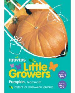 Little Growers Pumpkin Mammoth Seeds