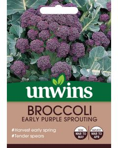 Broccoli (Sprouting) Early Purple Sprouting Seeds