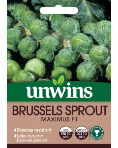 Brussels Sprout Maximus F1 Seeds