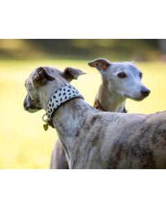 Digby & Fox Cow Hair Greyhound Collar - Spot - Large