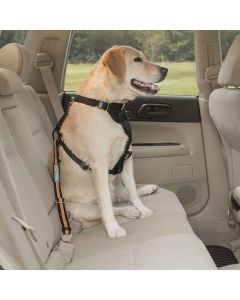 Kurgo Direct To Seatbelt Tether - Small - Black / Orange
