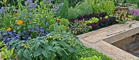 Plant Feed & Fertilisers