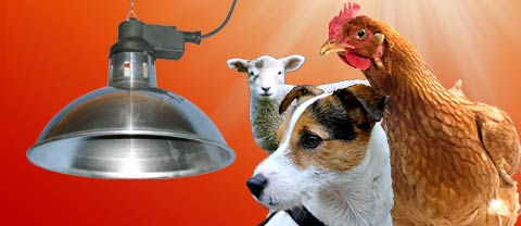 Pet Heat Lamps