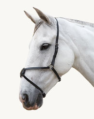 Equine | Bridle Wear